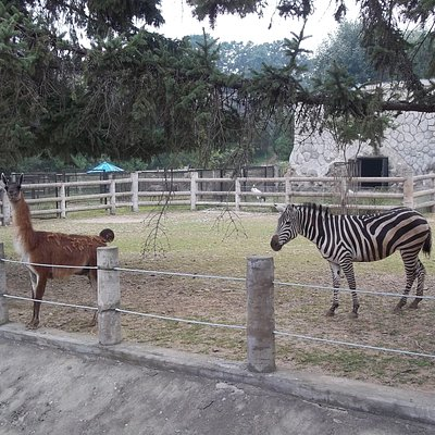 Different animals in a boundary.