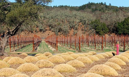 Great view of the vineyard.