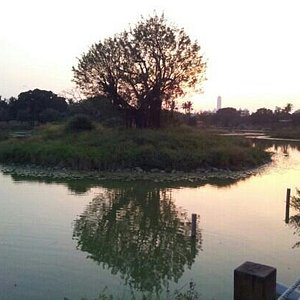 pond of weiwuying
