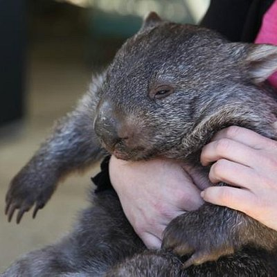 With one of the wombats at Birdland
