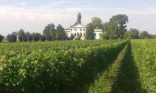 Due Carrare Villa Dolfin-Dal Martello detta La Mincana