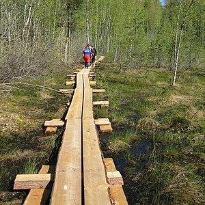Pulkkilanharju Trail