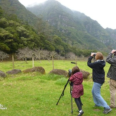 Birdwatching for all in Madeira Island