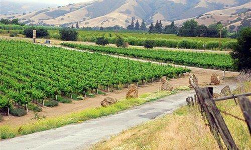 Casa de Vineyards