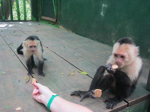 Feeding them =)