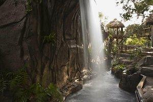 Forest Pool in Children's Rainforest
