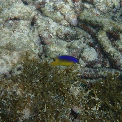 poisson à la barrière de corail