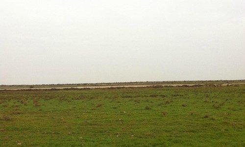 Western Dhi Qar 2013/14