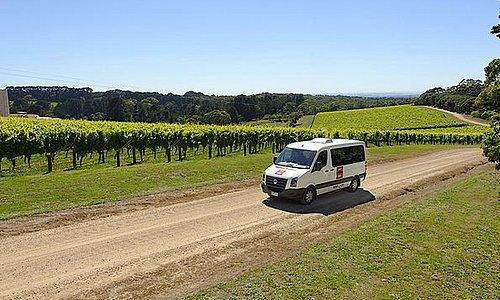 Port Phillip Estate Vineyard