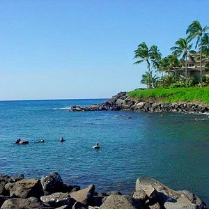 #1 Dive Site on Kauai !!!  Turtles - Fishies - Eels and MORE!!!