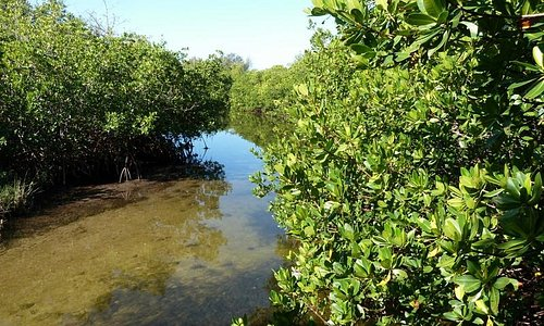 Some shallow areas to beach your kayaks