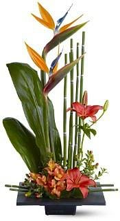 fresh tropical arrangement