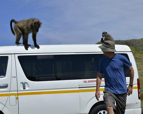 Rob showing us how not to get baboons away from the tour van