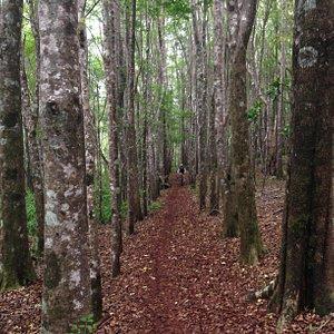 Makawao Forest Trails