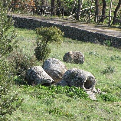 foresta pietrificata di Martis