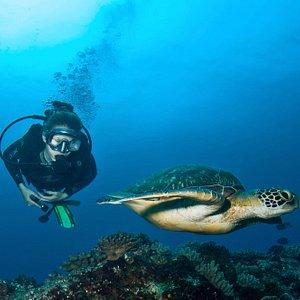 Balade avec une tortue