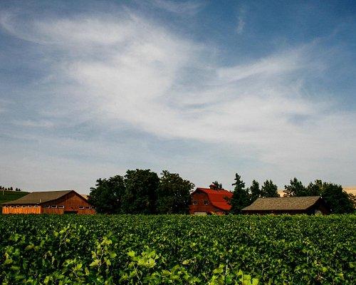 Summer in the Estate Vineyard.