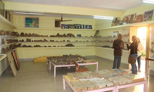 Mr. Sodha explaining about the fossils