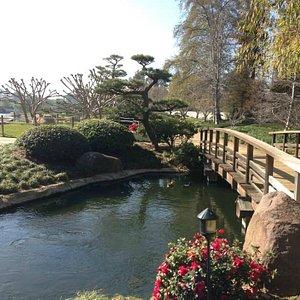 the-japanese-garden.jpg?w=300&h=300&s=1
