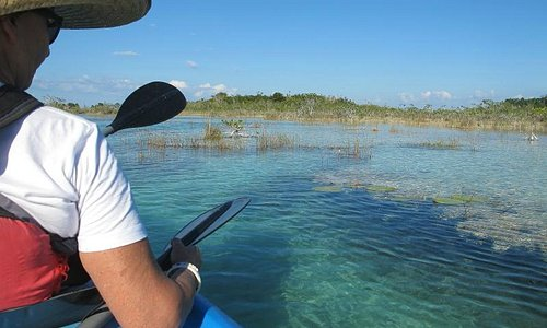 See the submerged stromatolites from a kayak