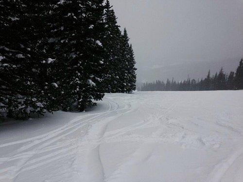 Deep snow along the tree line