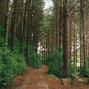 akatarawa-forest.jpg?w=300&h=300&s=1