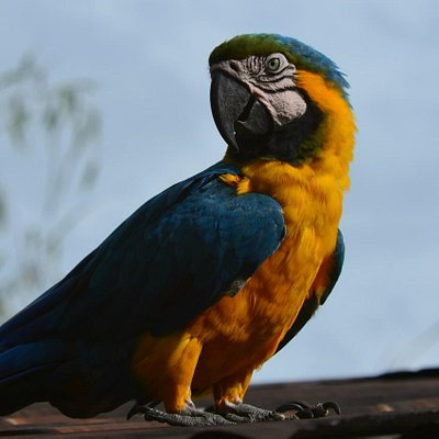 easy birding peru