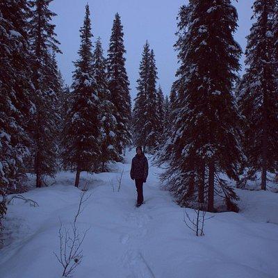 В лесу рядом с коттеджем