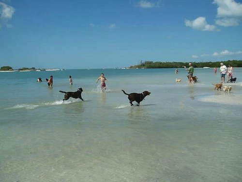 Bonita spring dog beach, my dogs luv it