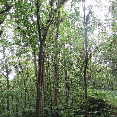 Edmund Rainforest