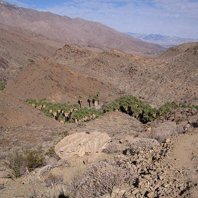 View of the oasis from above on the Palm Canyou trail