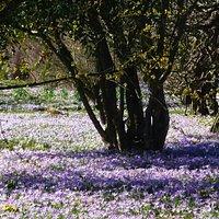 Early spring in Hermannshof