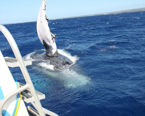Close Encounter of the Whale Kind