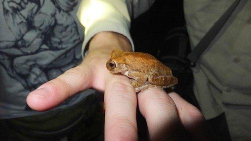 Una de las tantas ranas que se pueden encontrar en los senderos del lugar