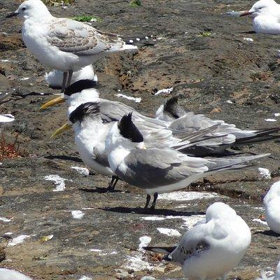 Nice seabirds