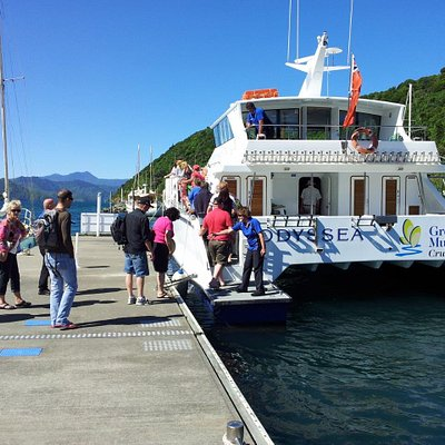 Boarding MV Odyssea in Picton