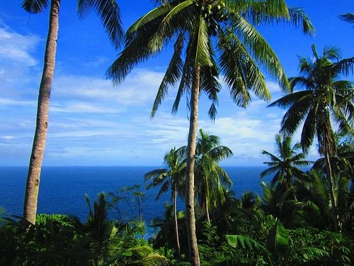 Coconut trees all around
