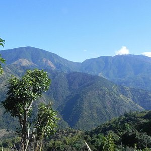 The Jewel Tones of the Jamaica Blue Mountain is simply breathtaking!