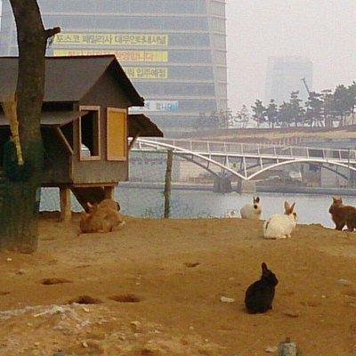 松島セントラルパークのうさぎ島