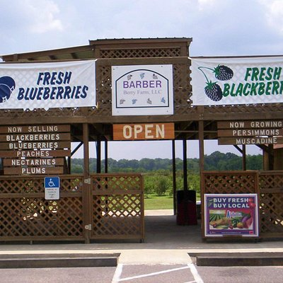 We're usually open for picking blueberries and blackberries starting around the end of May.