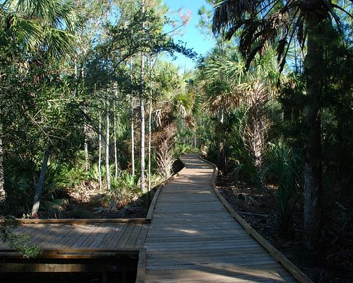 Wheelchair and puppy accessible boardwalk.