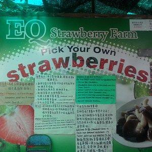 EQ strawberry farm
