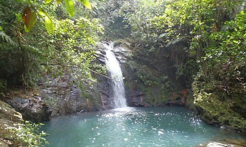 Tiger Fern Falls (lower) - a must do for any visitor!