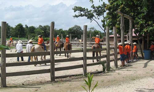horseback riding with a variety of horses perfect for every rider