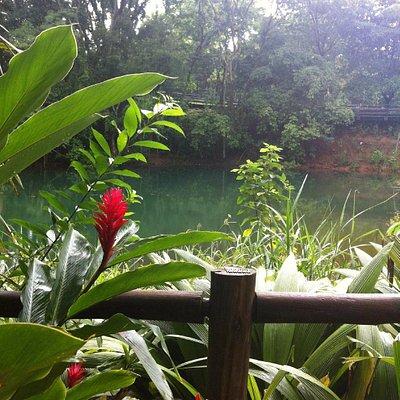 Parque Olhos D'água - Vista Para Lagoa