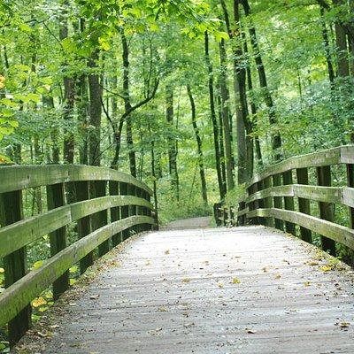 Sharon woods park