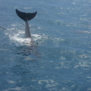 dolphin trail