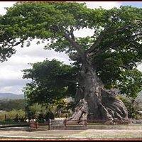 Parque la Ceiba