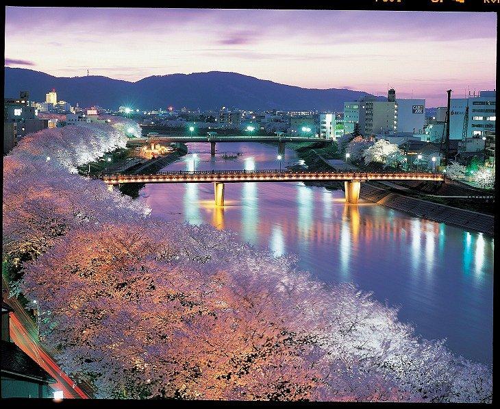 トワイライトの桜並木
