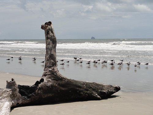 Na praia deserta da Ilha do Superagui